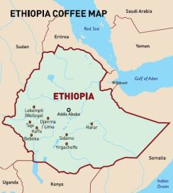ethiopia coffee region